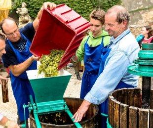 sedlecké vinobraní